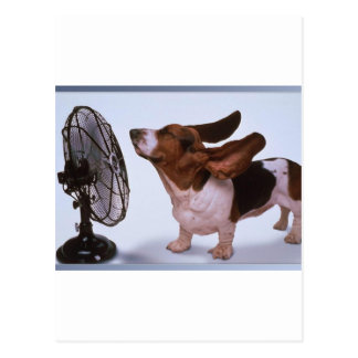 Breeze -Dog and Fan Postcard