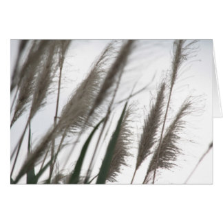 Breeze | Japanese Silvergrass Photography Blank Card