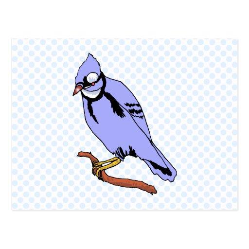 Breezee Blue Jay Postcard