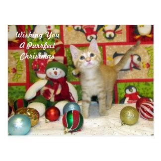 Breezy's Christmas Postcard