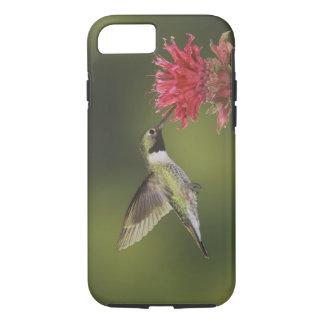 Breit-angebundener Kolibri, Selasphorus 2 iPhone 8/7 Case