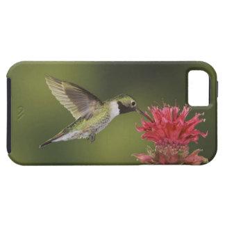Breit-angebundener Kolibri, Selasphorus 2 iPhone SE/5/5s Case