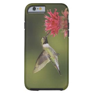 Breit-angebundener Kolibri, Selasphorus 2 Tough iPhone 6 Case