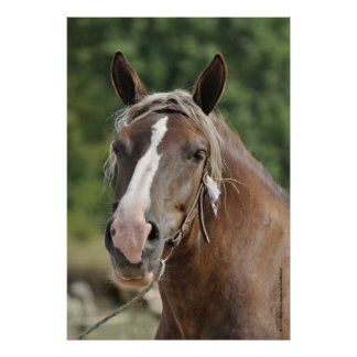 Breton draft horse mare poster
