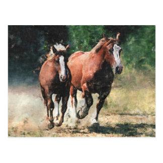 Breton draft horses postcard