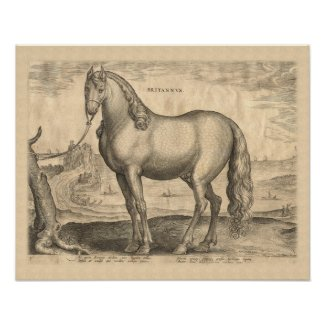 Breton Horse / Horse from Brittany Antique Print