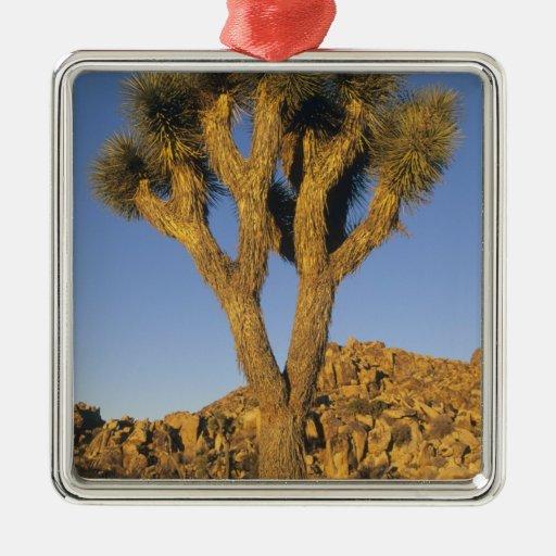 Brevifolia de la yuca, de la yuca), y granito adorno navideño cuadrado de metal