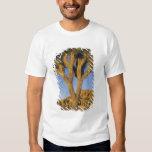 Brevifolia de la yuca, de la yuca), y granito camisas