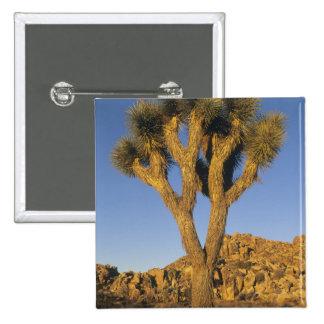 Brevifolia de la yuca, de la yuca), y granito pins