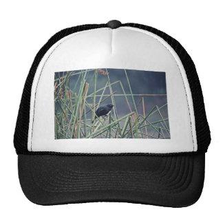 Brewer's blackbird trucker hat