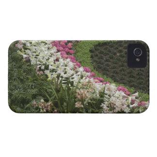 Brezo del rododendro (catawbiense del rododendro) iPhone 4 protectores