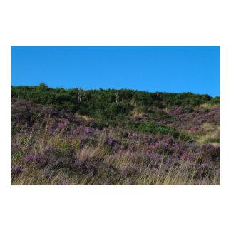 Brezo púrpura que cubre las colinas de Hednesford Fotografías