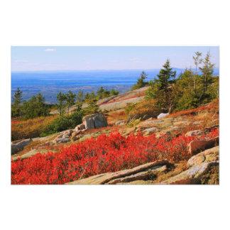 Brezo rojo en la montaña de Sargent, Acadia NP Cojinete