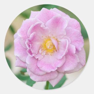 Briar Rose Classic Round Sticker