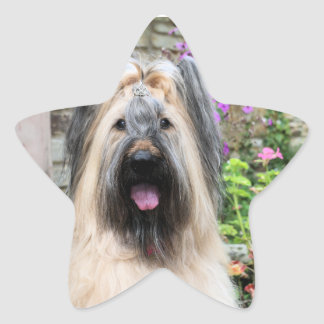 """Briard Dog in a Tiara """"Queen Bee"""" Star Stickers"""
