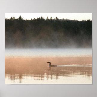 bribón en la niebla de la mañana póster