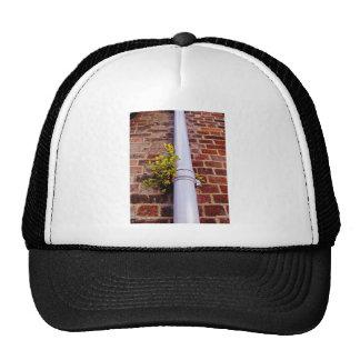 Brick wall and wild yellow flowers trucker hat