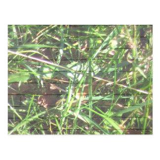 Brick Wall Grass Postcard