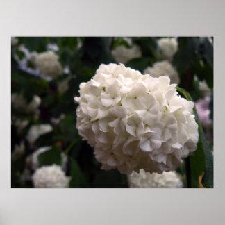 Bridal Flower Poster