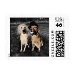 Bride and Groom Dogs Stamps