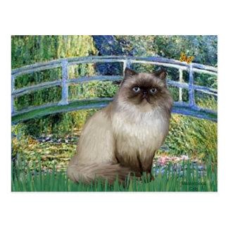 Bridge - Himalayan cat 7 Postcard