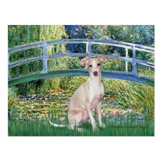 Bridge - Italian Greyhound 5 Postcard
