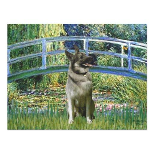 Bridge - Norwegian Elkhound Postcard
