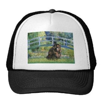 Bridge - Persian Calico cat Hat