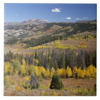 Bridger-Teton National Forest Tile
