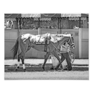 """Bridgetown""  Multi-Stakes winning Turf Sprinter Photo Print"