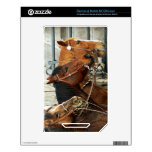 Bridled Horse Heads NOOK Color Decal