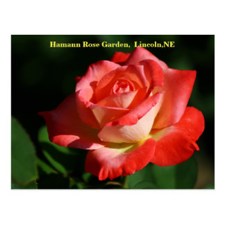 Brigadoon Rose Postcard HRG 400 2014