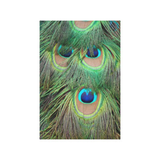 Bright and Bold Peacock Feathers Canvas Print