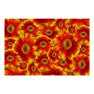 Bright and Glowing Gerbera Daisies Poster
