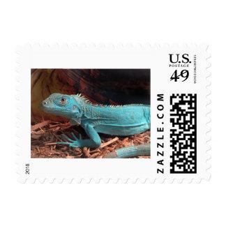 Bright Aqua Blue Iguana Postage