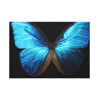 Bright Blue Butterfly Canvas Print