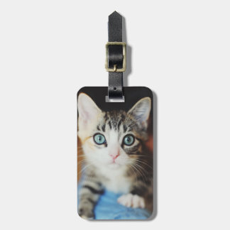 Bright Blue Eyed Kitten Luggage Tag
