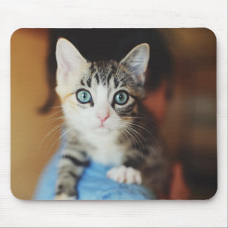 Bright Blue Eyed Kitten Mouse Pad