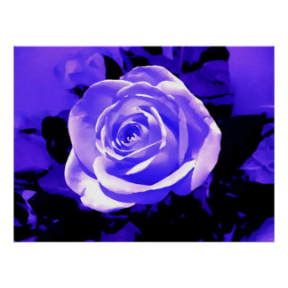 Bright Blue Rose Flower Head Poster Print Posters