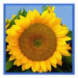 Bright Blue Sunflower Photo Print