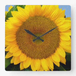 Bright Blue Sunflower Square Wall Clock