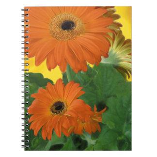 Bright, Bold Gerbera Dasies Spiral Note Book