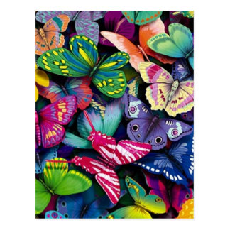 Bright Butterflies Post Cards