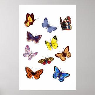 Bright Butterflies Poster