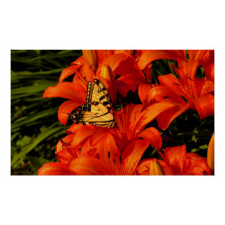 Bright butterfly n tiger flowers poster
