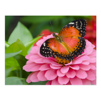 Bright Butterfly Postcard
