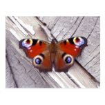 bright butterfly postcards
