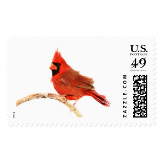 Bright Cardinal Stamp