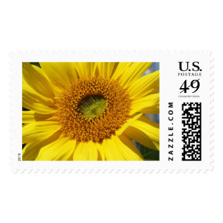 Bright & Cheerful Sunflower Close-up Postage