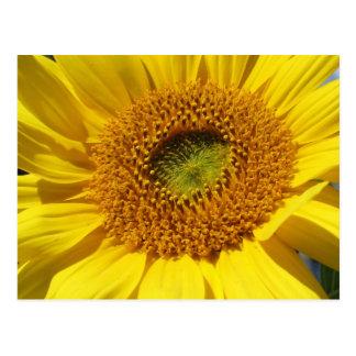 Bright & Cheerful Sunflower Close-up Postcard
